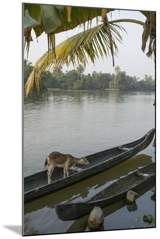 A Goat Waits on a Canoe Until its Owner Returns-Kelley Miller-Mounted Photographic Print