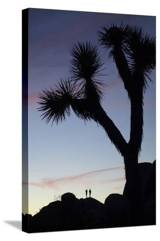 Late Rays of Light at Sunset in Joshua Tree National Park, California-Bill Hatcher-Stretched Canvas Print