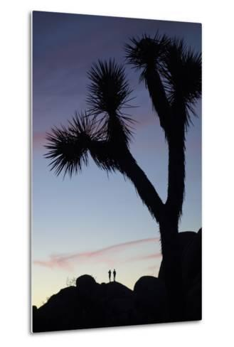 Late Rays of Light at Sunset in Joshua Tree National Park, California-Bill Hatcher-Metal Print