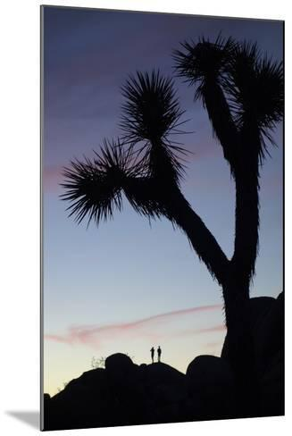 Late Rays of Light at Sunset in Joshua Tree National Park, California-Bill Hatcher-Mounted Photographic Print