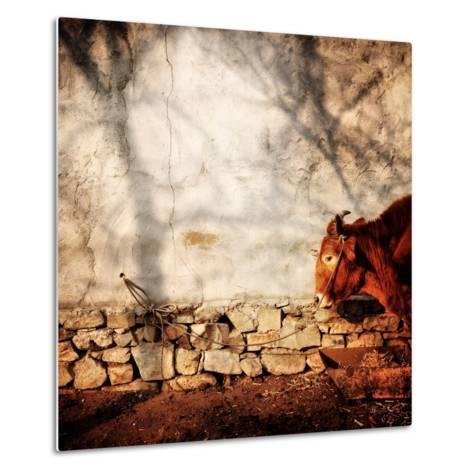 A Cow Tied Up Outside a Small Farmhouse in Rural China-Sean Gallagher-Metal Print