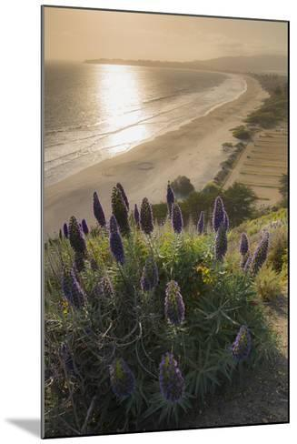 Flowers Along the Pacific Coast Highway in California-Jeff Mauritzen-Mounted Photographic Print