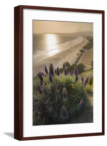 Flowers Along the Pacific Coast Highway in California-Jeff Mauritzen-Framed Art Print