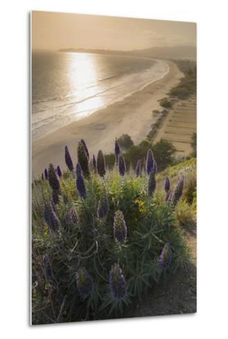 Flowers Along the Pacific Coast Highway in California-Jeff Mauritzen-Metal Print