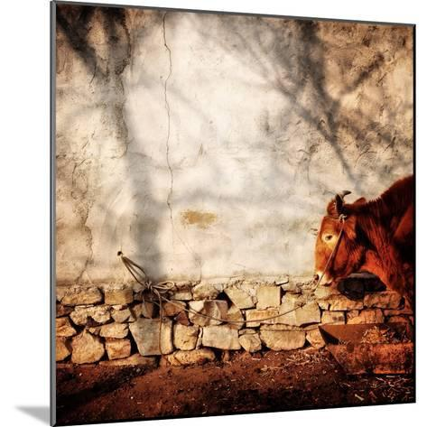 A Cow Tied Up Outside a Small Farmhouse in Rural China-Sean Gallagher-Mounted Photographic Print