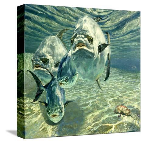 Four Permit and Coral Crab, 1987-Stanley Meltzoff-Stretched Canvas Print