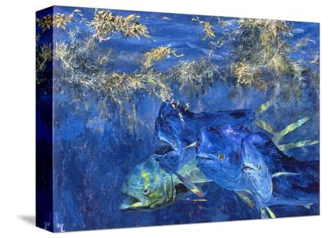 Dolphin Cruising the Weed Line, 1985-Stanley Meltzoff-Stretched Canvas Print