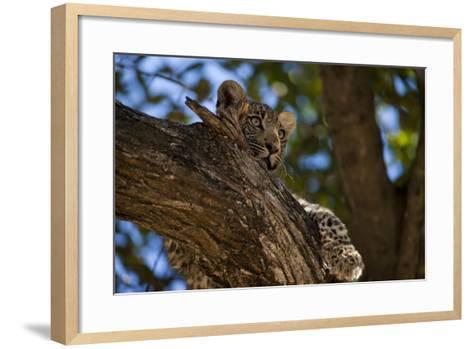 A Leopard Cub Resting in a Tree-Beverly Joubert-Framed Art Print