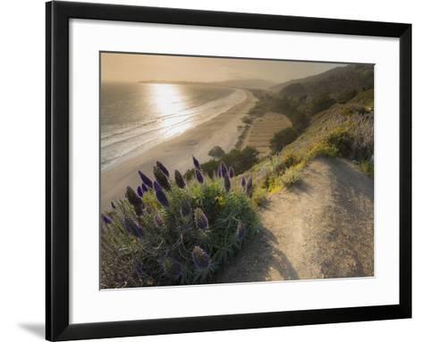 Flowers Along the Pacific Coast Highway in California-Jeff Mauritzen-Framed Art Print