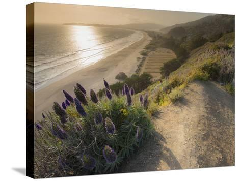 Flowers Along the Pacific Coast Highway in California-Jeff Mauritzen-Stretched Canvas Print