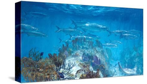 Tarpon at Looe Key-Stanley Meltzoff-Stretched Canvas Print
