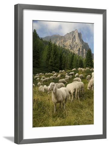 Sheep on the Road to Forcella Valmaggiore-Ulla Lohmann-Framed Art Print