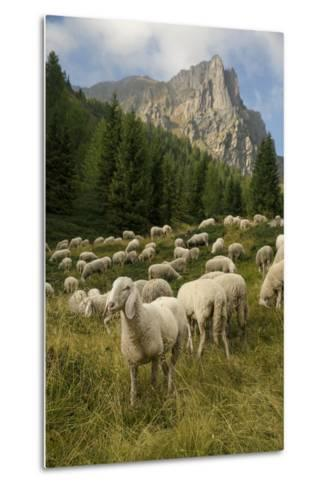 Sheep on the Road to Forcella Valmaggiore-Ulla Lohmann-Metal Print