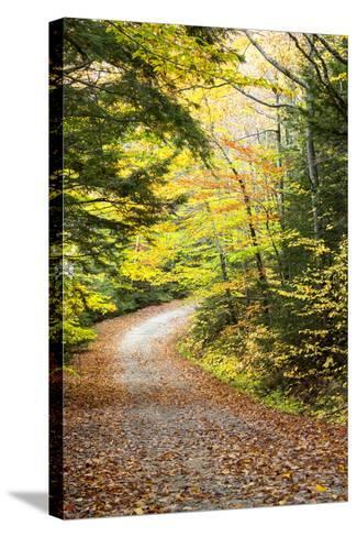 Fallen Leaves Litter a Forest Road in Autumn-Robbie George-Stretched Canvas Print