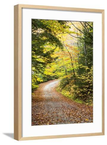 Fallen Leaves Litter a Forest Road in Autumn-Robbie George-Framed Art Print