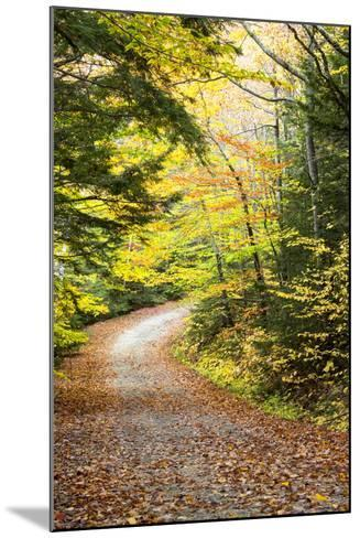 Fallen Leaves Litter a Forest Road in Autumn-Robbie George-Mounted Photographic Print