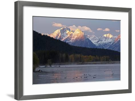 The Teton Range and the Snake River at Sunrise. a Flock of Canada Geese Rest in the River-Marc Moritsch-Framed Art Print