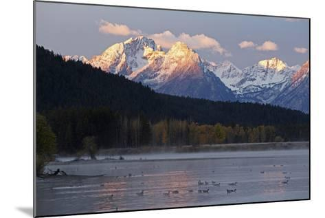 The Teton Range and the Snake River at Sunrise. a Flock of Canada Geese Rest in the River-Marc Moritsch-Mounted Photographic Print