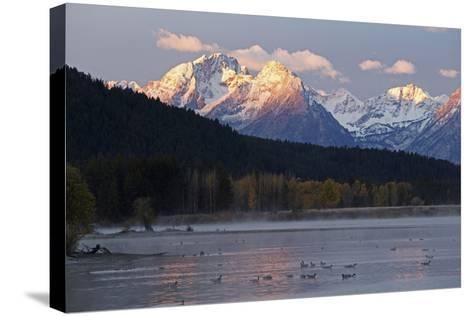 The Teton Range and the Snake River at Sunrise. a Flock of Canada Geese Rest in the River-Marc Moritsch-Stretched Canvas Print