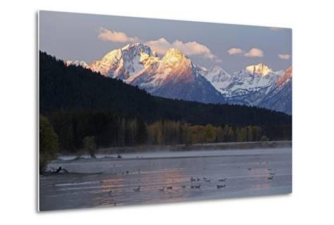 The Teton Range and the Snake River at Sunrise. a Flock of Canada Geese Rest in the River-Marc Moritsch-Metal Print