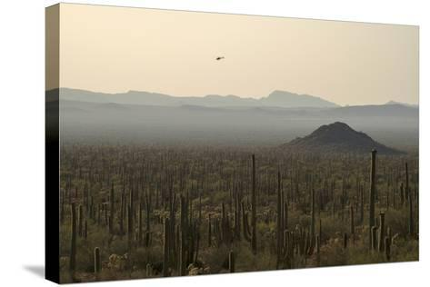 A Border Patrol Helicopter Looking for Illegal Activity in Organ Pipe Cactus National Monument-Bill Hatcher-Stretched Canvas Print