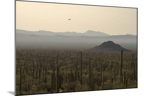 A Border Patrol Helicopter Looking for Illegal Activity in Organ Pipe Cactus National Monument-Bill Hatcher-Mounted Photographic Print