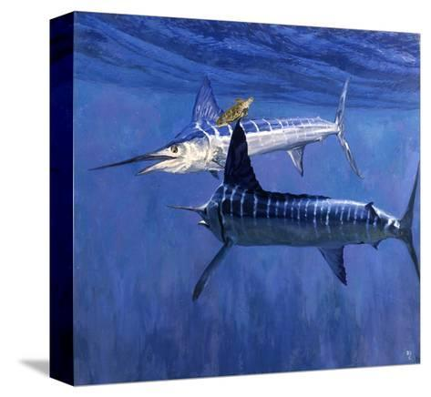 Two Striped Marlin and Turtle-Stanley Meltzoff-Stretched Canvas Print