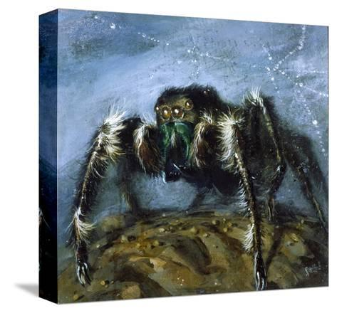 Wolf Spider: a Gigantic Hairy Spider with Beady Eyes Emerges from its Lair to Wreak Havoc-Stanley Meltzoff-Stretched Canvas Print