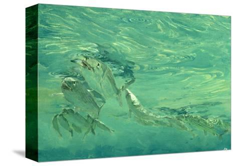 Bonefish Bibblin' in De Drougey Water, 1988-Stanley Meltzoff-Stretched Canvas Print