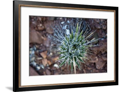 Detail of a Young Yucca Plant in the Indian Creek Drainage Near Monticello, Utah-Scott S^ Warren-Framed Art Print