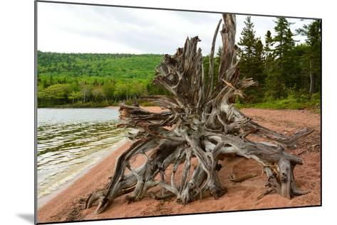 Large Driftwood Tree on the Warren Lake Beach, in Cape Breton Highlands National Park-Darlyne A^ Murawski-Mounted Photographic Print