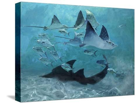 Four Eagle Rays, Shark and Permit School, 2000-Stanley Meltzoff-Stretched Canvas Print