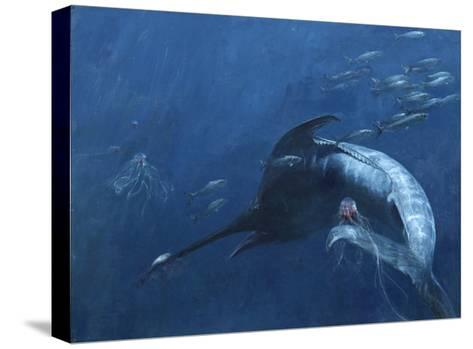 Blue Marlin, Bunker, and Jellies, 2003-Stanley Meltzoff-Stretched Canvas Print