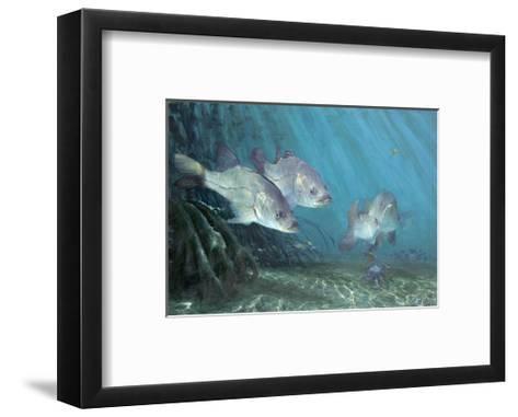Three Snook in Mangroves, 2002-Stanley Meltzoff-Framed Art Print