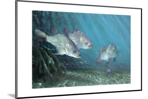 Three Snook in Mangroves, 2002-Stanley Meltzoff-Mounted Giclee Print