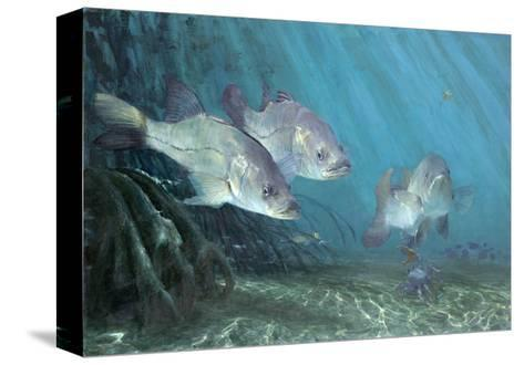 Three Snook in Mangroves, 2002-Stanley Meltzoff-Stretched Canvas Print
