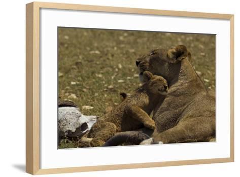A Lion Cub Nuzzling its Mother Near an African Buffalo Skull-Beverly Joubert-Framed Art Print