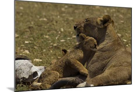 A Lion Cub Nuzzling its Mother Near an African Buffalo Skull-Beverly Joubert-Mounted Photographic Print