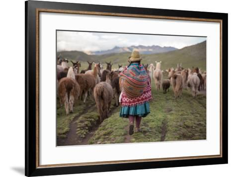 A Quechua Woman Herding Llamas, Alpacas, and Sheep Back to Town from Grazing in the Mountains-Erika Skogg-Framed Art Print