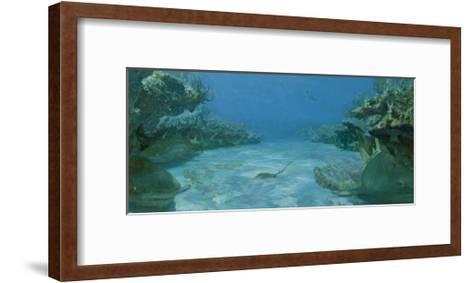 Alley of Transfixd Sharks, Dry Bar, 1975-Stanley Meltzoff-Framed Art Print