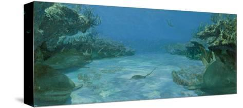 Alley of Transfixd Sharks, Dry Bar, 1975-Stanley Meltzoff-Stretched Canvas Print