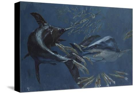 Broadbill, Mako and Sea Arrows, New Jersey, 1988-Stanley Meltzoff-Stretched Canvas Print
