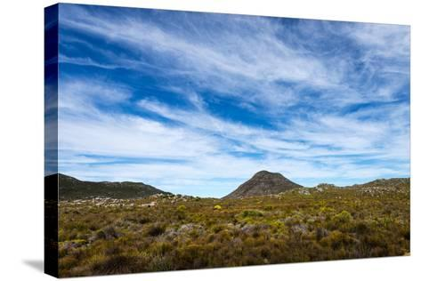 A Fragile Fynbos and Restios Plain Beneath a Front of Wispy Clouds-Jason Edwards-Stretched Canvas Print