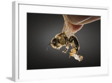 Semen to Inseminate Queens Is Collected from a Drone at a Usda Lab-Anand Varma-Framed Art Print