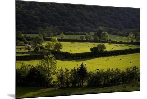 Fields Near Buttermere in the Lake District-Alex Treadway-Mounted Photographic Print