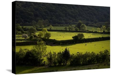 Fields Near Buttermere in the Lake District-Alex Treadway-Stretched Canvas Print
