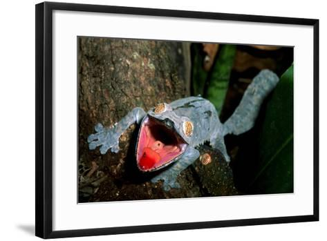 Close Up Portrait of a Leaf-Tailed Gecko, Uroplatus Species-Cagan Sekercioglu-Framed Art Print