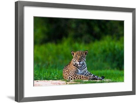 A Portrait of a Wild Jaguar Resting on the Banks of the Cuiaba River, in the Pantanal-Steve Winter-Framed Art Print