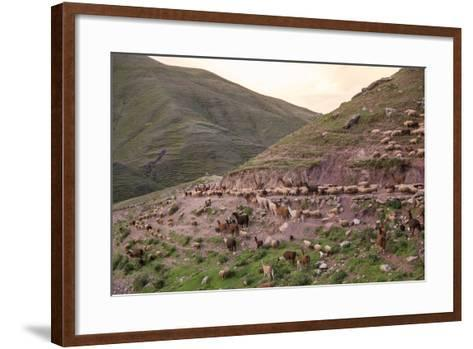 A Herd of Llamas, Alpacas and Sheep Round a Mountain Bend in Peru-Erika Skogg-Framed Art Print