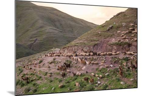 A Herd of Llamas, Alpacas and Sheep Round a Mountain Bend in Peru-Erika Skogg-Mounted Photographic Print